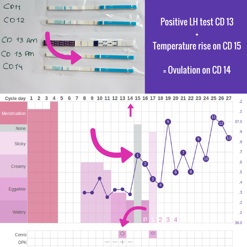 How to use cheap ovulation tests: LH strips – Ingefleur